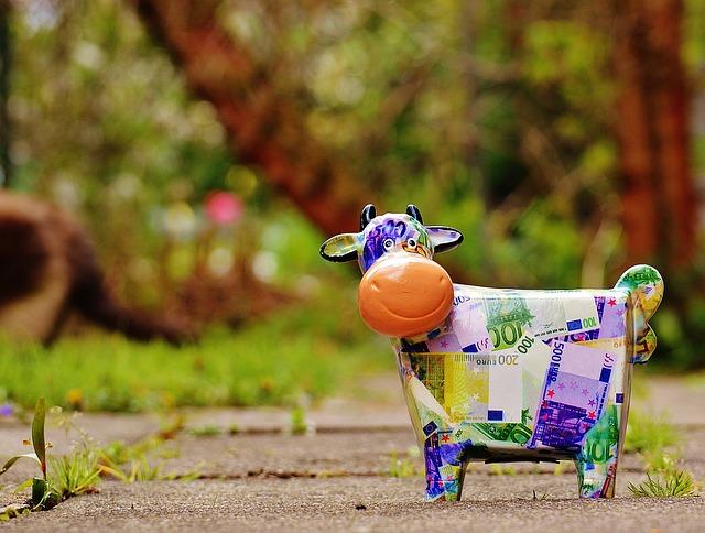 úsměv krávy