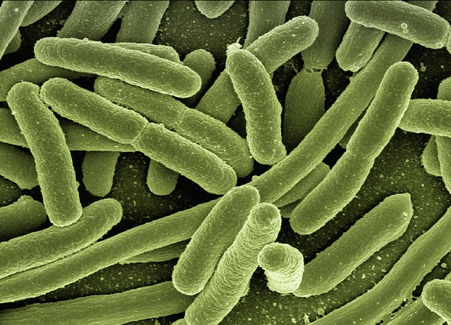 bakterie koli