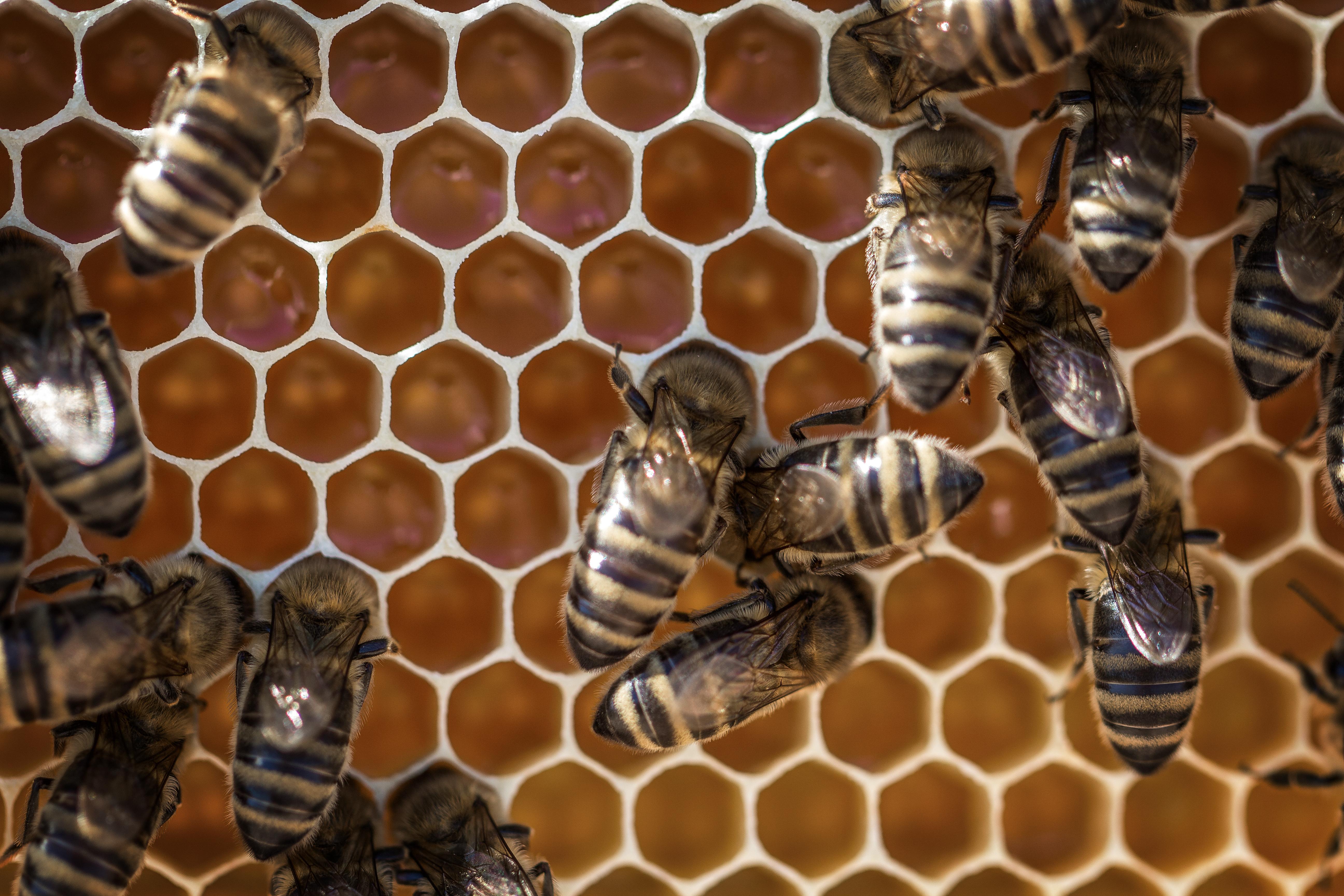 včely a plástev (1)
